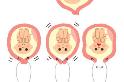 胎児 子宮 イラスト